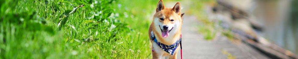 愛知 保護犬 里親募集 預かりボランティア募集